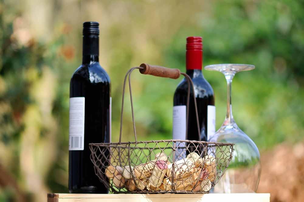 Regent - Rotwein aus Deutschland