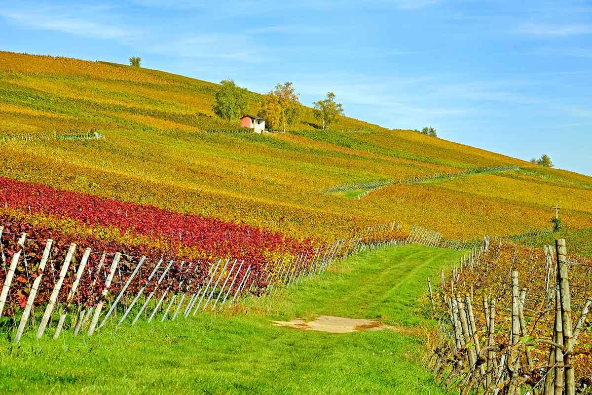 Spanien Weinanbau Rotwein aus Deutschland
