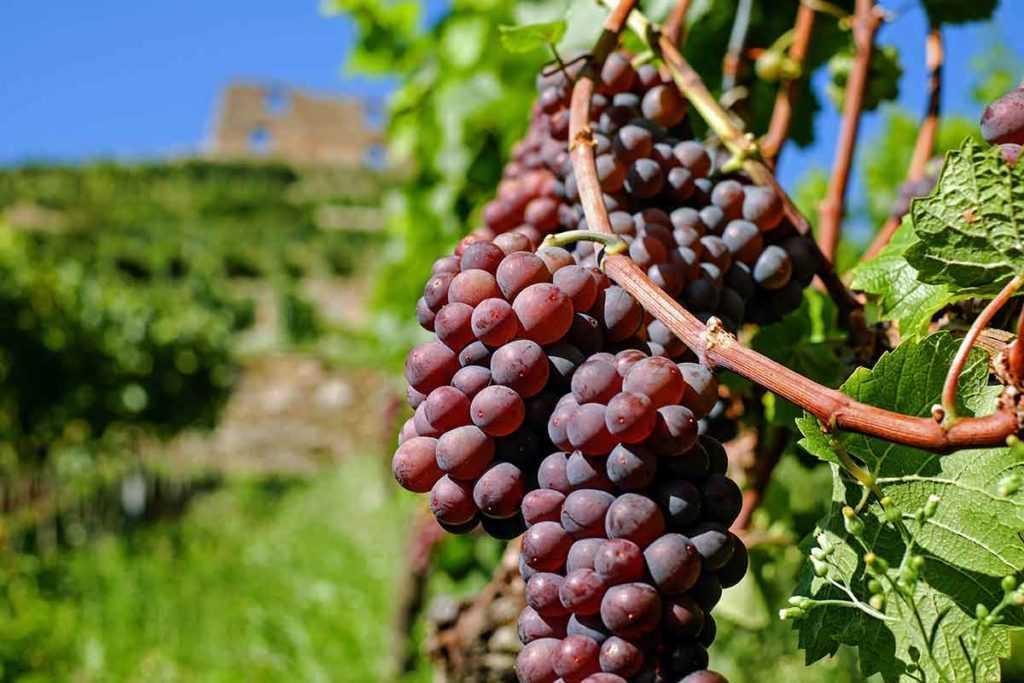 Weinanbaugebiet Spanien Rotwein